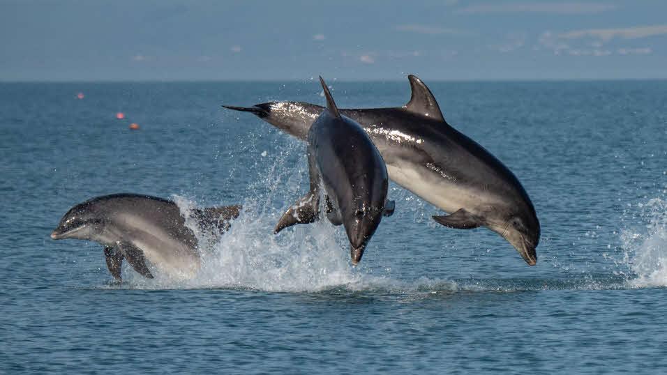 Kuta Lombok Dolphins Cruise
