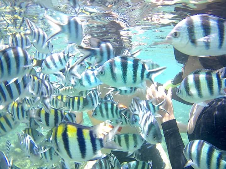 Snorkeling Tour In Secret Gilis